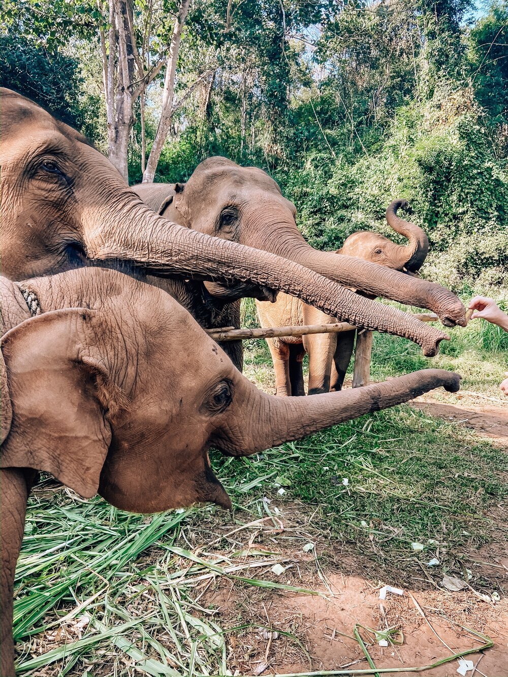 Getting to Chai Lai Orchid elephant sanctuary in Thailand