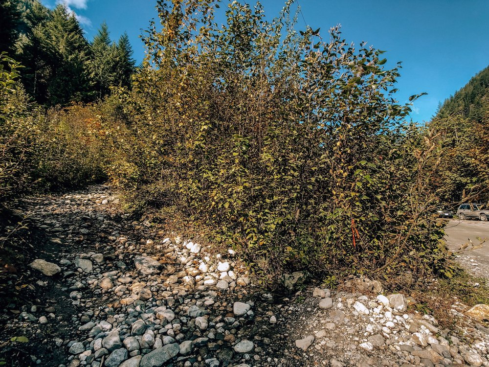 Sigurd Trail Trailhead to Crooked Falls Hike