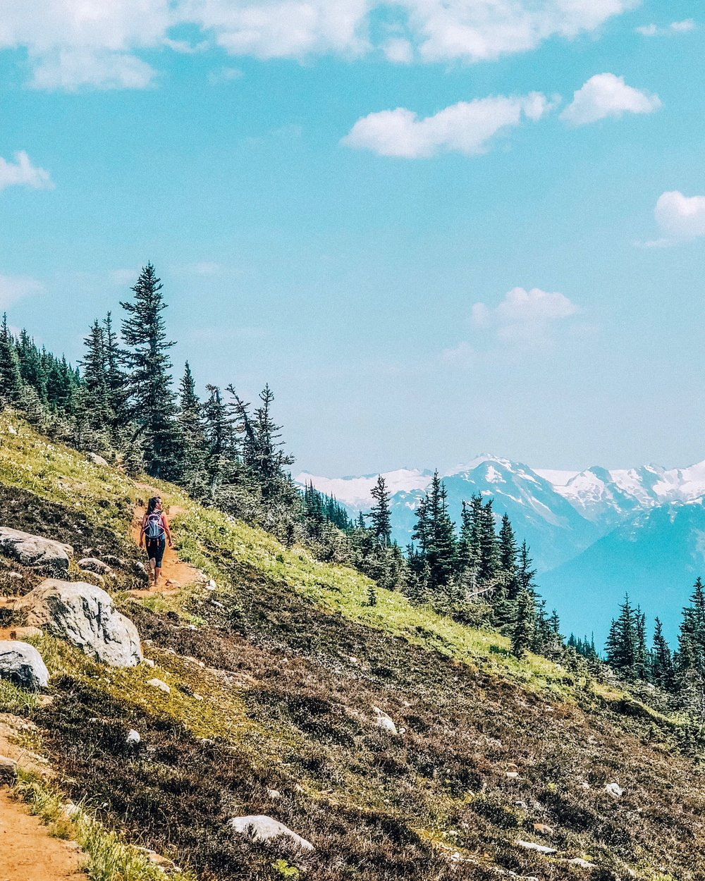 Alpine meadows and wildflowers on Whistler mountain