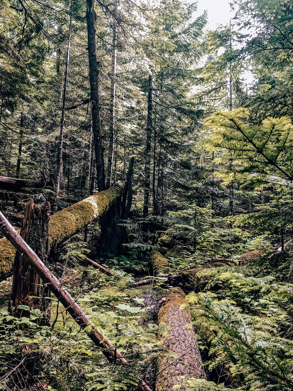 Coast rainforest hike in Whistler BC Canada