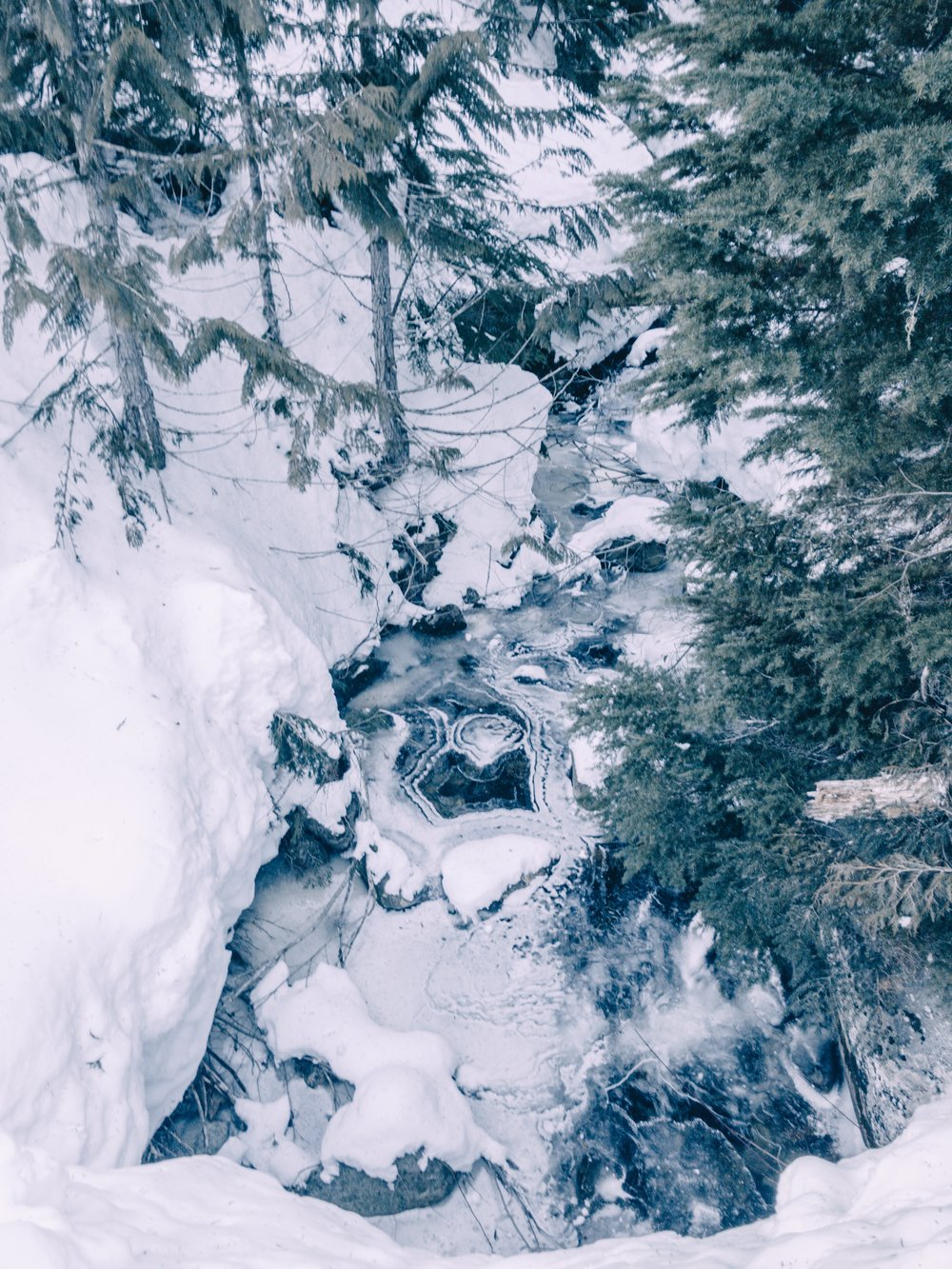 Snowshoe hike in Whistler forest
