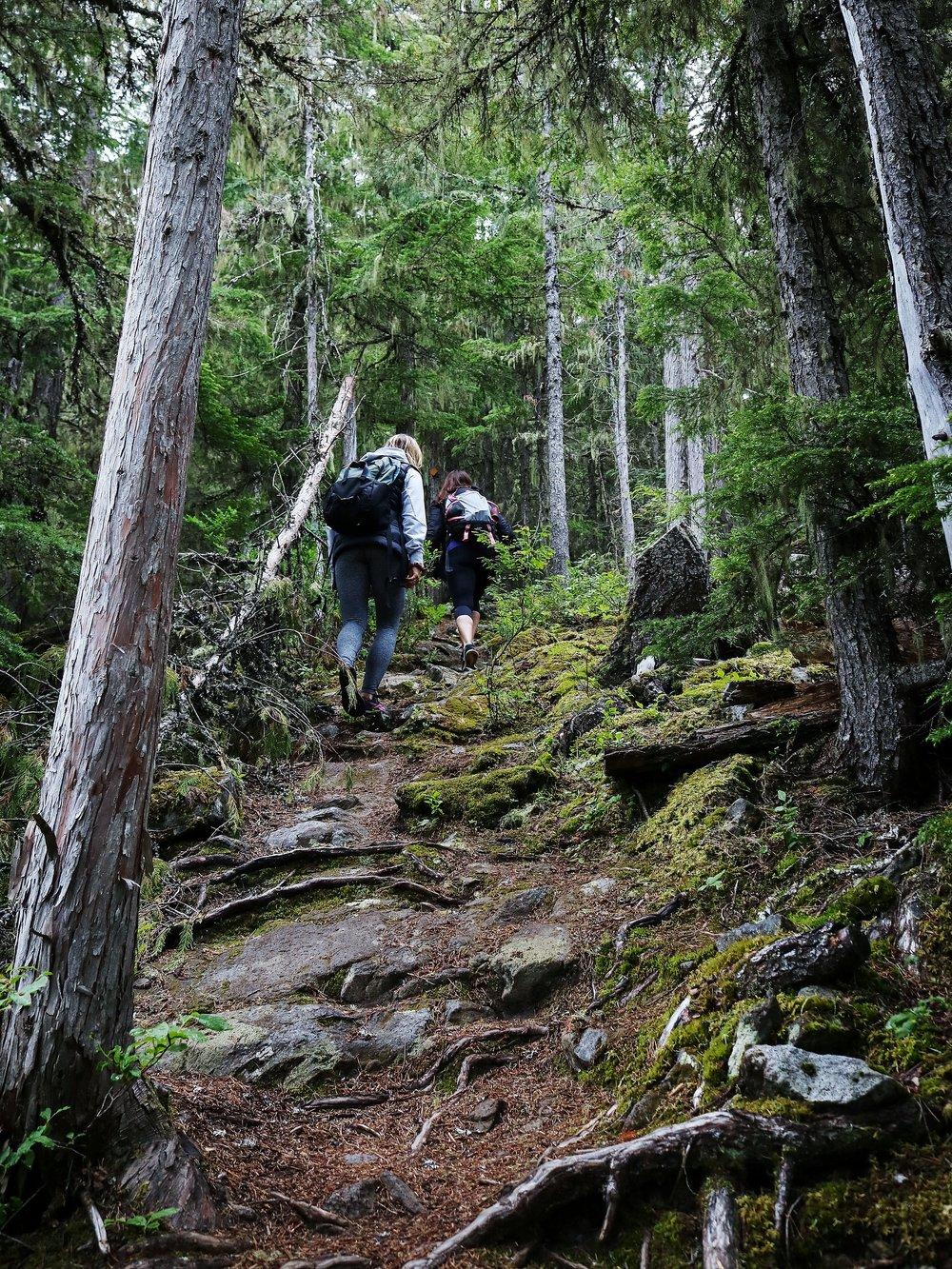 Steep hike up Whistler's Crater Rim Trail Hike