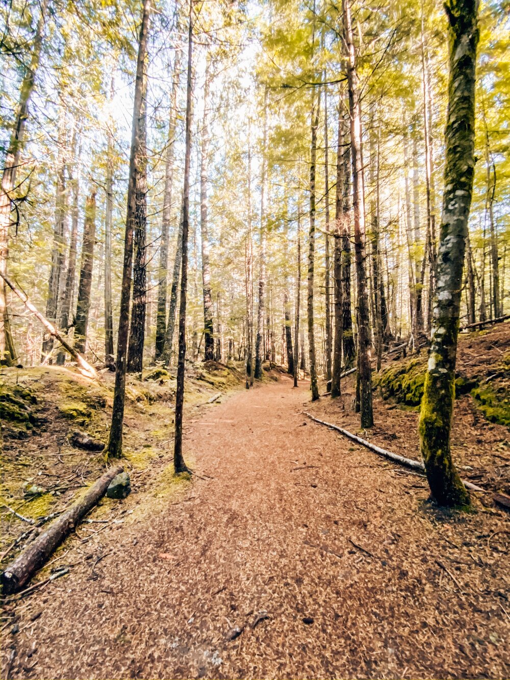 Best easy hike for beginners in Vancouver
