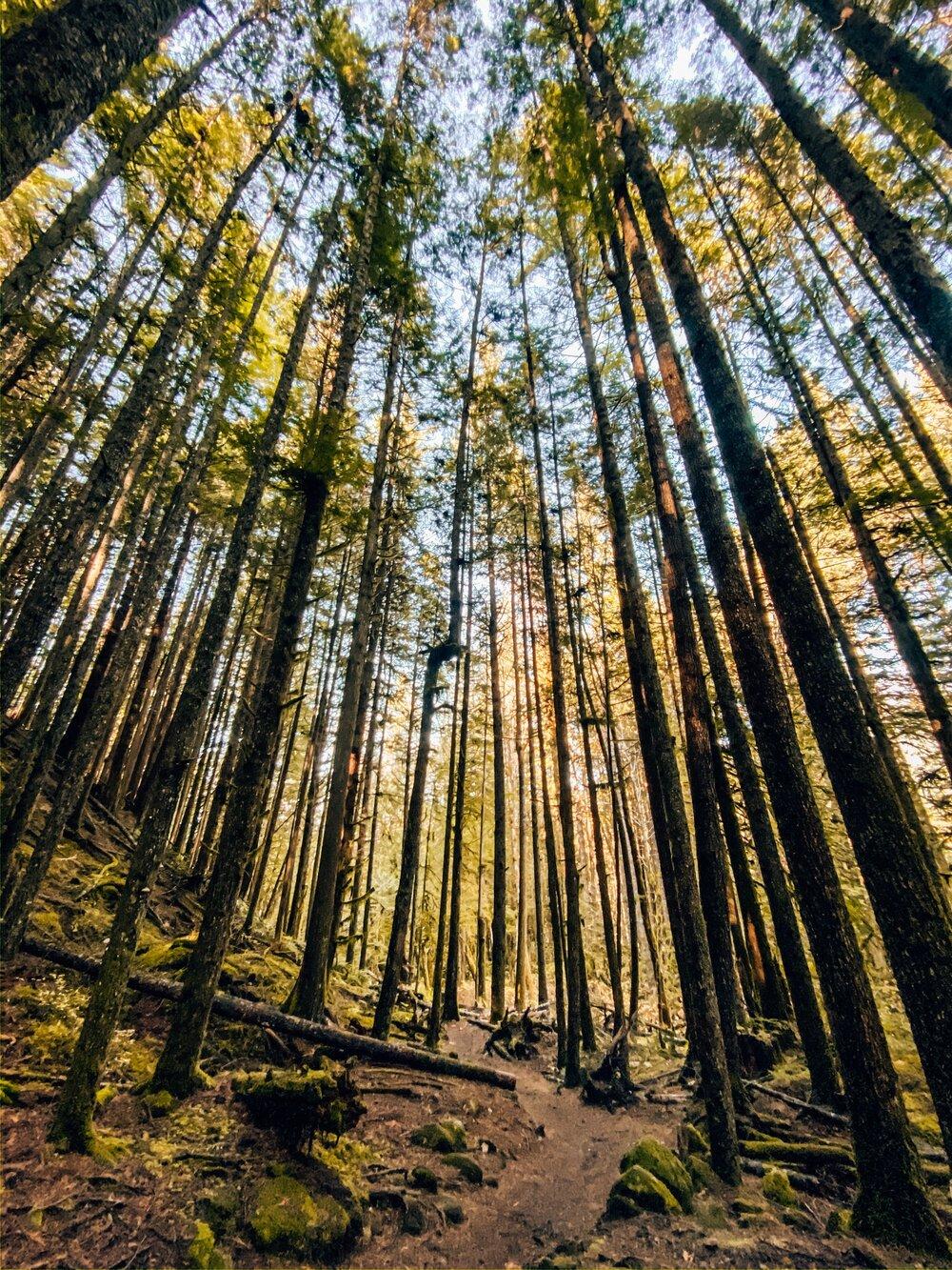 Best hiking trails around Squamish BC Canada