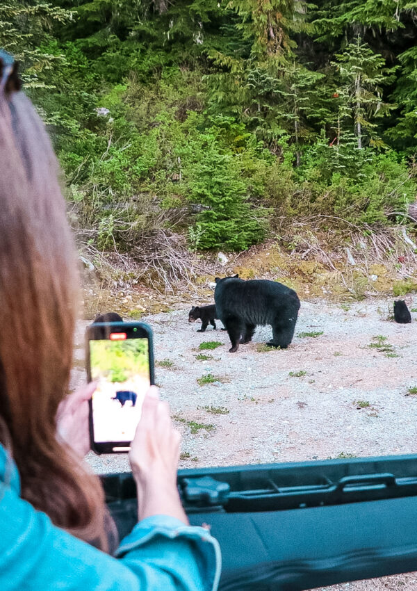 bear watching tour in Whistler BC Canada